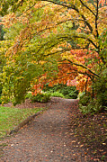 Fall Colors Autumn Colors Metal Prints - Autumn Path Metal Print by Mike Reid