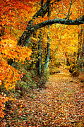 Deep Roots Posters - Autumn Pathway Poster by Cheryl Davis