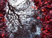 Red Photographs Metal Prints - Autumn reflections II Metal Print by Artecco Fine Art Photography - Photograph by Nadja Drieling
