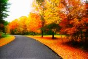 Photos Of Autumn Digital Art - Autumn Road by William Carroll