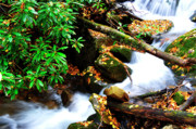 Mountain Stream Photo Posters - Autumn Serenity Poster by Thomas R Fletcher