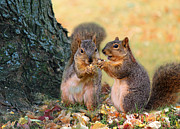 Susan Schwarting - Autumn Squirrels