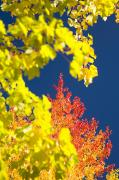 Autumn Foliage Photos - Autumn Trees by Craig Tuttle