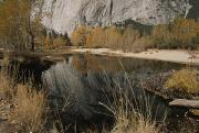 Woodland Scenes Prints - Autumn View Along The Merced River Print by Marc Moritsch