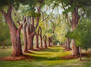 Glenda Cason - Avenue of Oaks