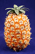 Tropical Fruits Posters - Azores islands pineapple Poster by Gaspar Avila