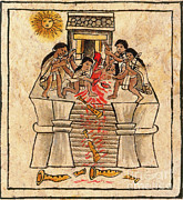 Espana Posters - Aztec Human Sacrifice, Codex Poster by Photo Researchers