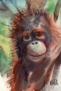 Orangutans Framed Prints - Baby Orangutan Framed Print by Donald Maier