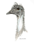 Ratite Drawings Prints - Bad Leroy Brown the Emu Print by Mamie Greenfield