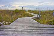 Shore Prints - Bald Head Island Print by Betsy A Cutler East Coast Barrier Islands