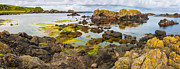 Puddle Posters - Ballintoy Bay Basalt Rock Poster by Semmick Photo