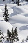 Snow Drifts Prints - Banff National Park, Alberta, Canada Print by Michael Interisano