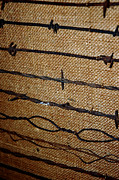 Barbed Wire Fences Framed Prints - Barbed Wire Framed Print by LeeAnn McLaneGoetz McLaneGoetzStudioLLCcom
