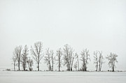 Winter Landscape Photos - Bare by Pamela Baker