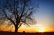 Skip Nall Prints - Bare Tree At Sunset Print by Skip Nall