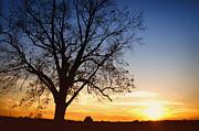 Bare Tree At Sunset Print by Skip Nall