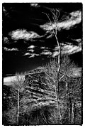 Bare Trees At Red Rocks Print by David Patterson