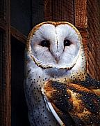 Owl Digital Art Posters - Barn Owl  Poster by Anthony Jones
