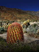 Barrel Cactus Posters - Barrel Cactus Poster by Chris Brannen