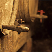 Wine Cellar Photos - Barrels of wine in a wine cellar. France by Bernard Jaubert