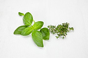 Italian Kitchen Posters - Basil and thyme Poster by Joana Kruse