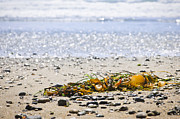 Seaweed Photos - Beach detail on Pacific ocean coast by Elena Elisseeva