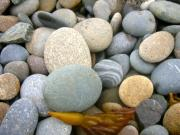Pebbles Posters - Beach Rocks Poster by Stephanie Troxell