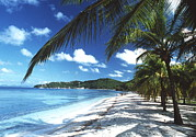 St Vincent And The Grenadines Prints - Beach With Palm Trees Print by Peter Falkner