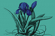 Roots Digital Art - Beautiful Iris by Evelyn Patrick