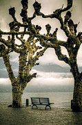 Bench Framed Prints - Bench Under Plane Trees Framed Print by Joana Kruse