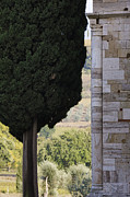 Italian Cypress Photo Acrylic Prints - Benedictine Monastery of SantAntimo Acrylic Print by Jeremy Woodhouse