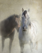 Two Horses Posters - Best Friends Poster by Betty LaRue