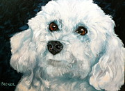 White Dog Drawings Framed Prints - Bichon Frise Framed Print by Susan A Becker