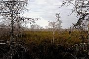 Saw Prints - Big cypress Print by David Lee Thompson