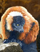 Red-ruffed Lemur Posters - Big Red Poster by Bev Lewis