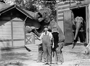 Overalls Posters - Bill Snyder, Elephant Trainer Poster by Everett