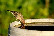 Bath-house Photos - Bird-Bath Reflection 2 by Don Schroder