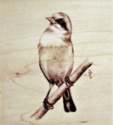 Wing Pyrography Posters - Bird Poster by Ilaria Andreucci