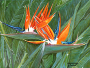 Bird Of Paradise Flower Painting Framed Prints - Birds Of Paradise Framed Print by Larry Geyrozaga