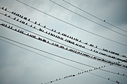 Bird On A Wire Posters - Birds on a wire Poster by John Greim