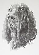 Purebred Drawings - Black and Tan Coonhound by Barbara Keith