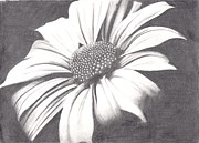 Black And White Flower Print by Amanda Rhone