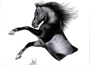 Horse Drawings Prints - Black Arabian Mare Print by Cheryl Poland