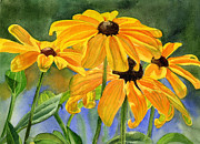 Golden Brown Painting Posters - Black Eyed Susans Poster by Sharon Freeman