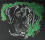 Michele Hollister - for Nancy Asbell - Black Lab Pastel