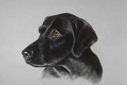 Pair Pastels Framed Prints - Black Labrador Framed Print by Patricia Ivy