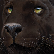Wildlife Art Painting Originals - Black Leopard by Jurek Zamoyski