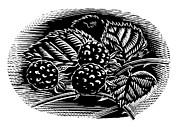 Black Berries Framed Prints - Blackberries, Woodcut Framed Print by Gary Hincks