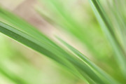 Abstract Photo Posters - Blades of Grass Poster by Bonnie Bruno