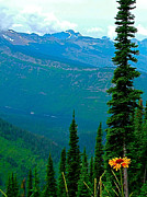 Montana Digital Art - Blanketflower along Highline Trail in Glacier NP by Ruth Hager